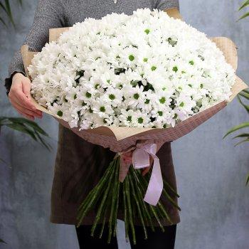 Букет из 51 белой кустовой хризантемы Бакарди