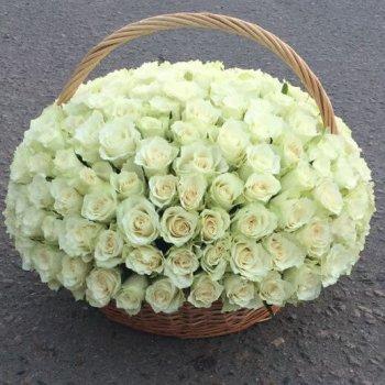 151 белая роза в корзине