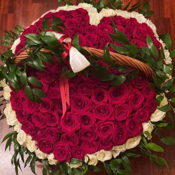 151 красная и белая роза в корзине