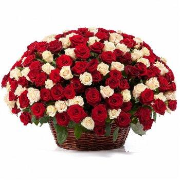 251 красно-белая роза в корзине