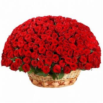 251 красная роза в корзине