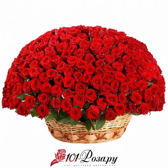 Букет из 251 красной розы в корзине