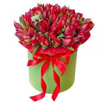 Букет из 51 красного тюльпана в коробке