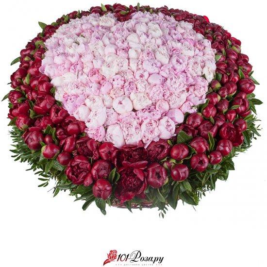 Букет из 501 красно-розовых пионов