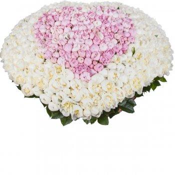 501 бело-розовый пион в корзине