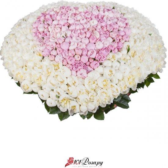 Букет из 501 бело-розовых пионов