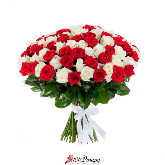 101 красно-белая роза (70 см)