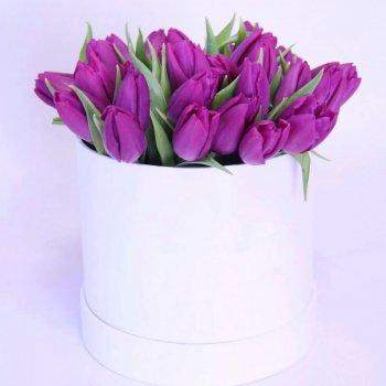 Букет из 25 фиолетовых тюльпанов в коробке