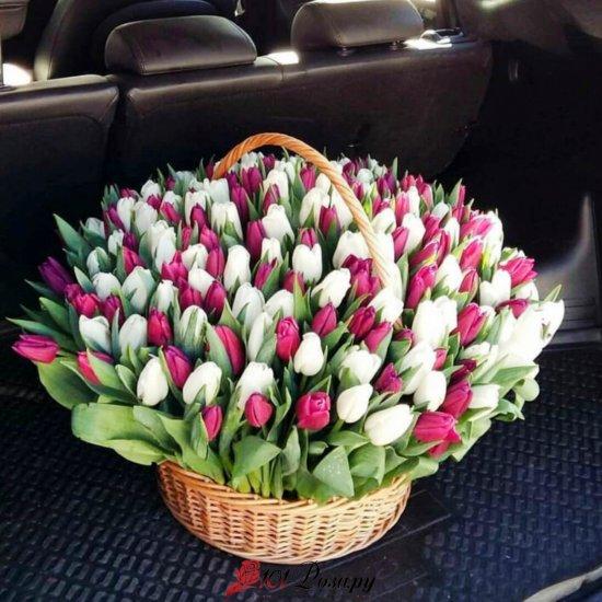 Корзина из 301 бело-розового тюльпана